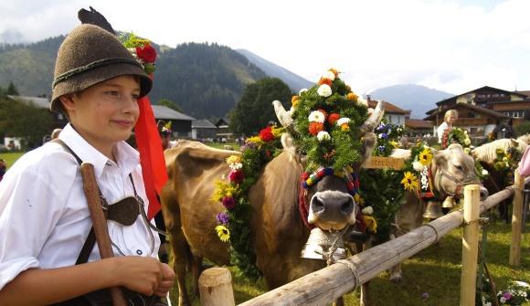 Almabtrieb in Tyrol