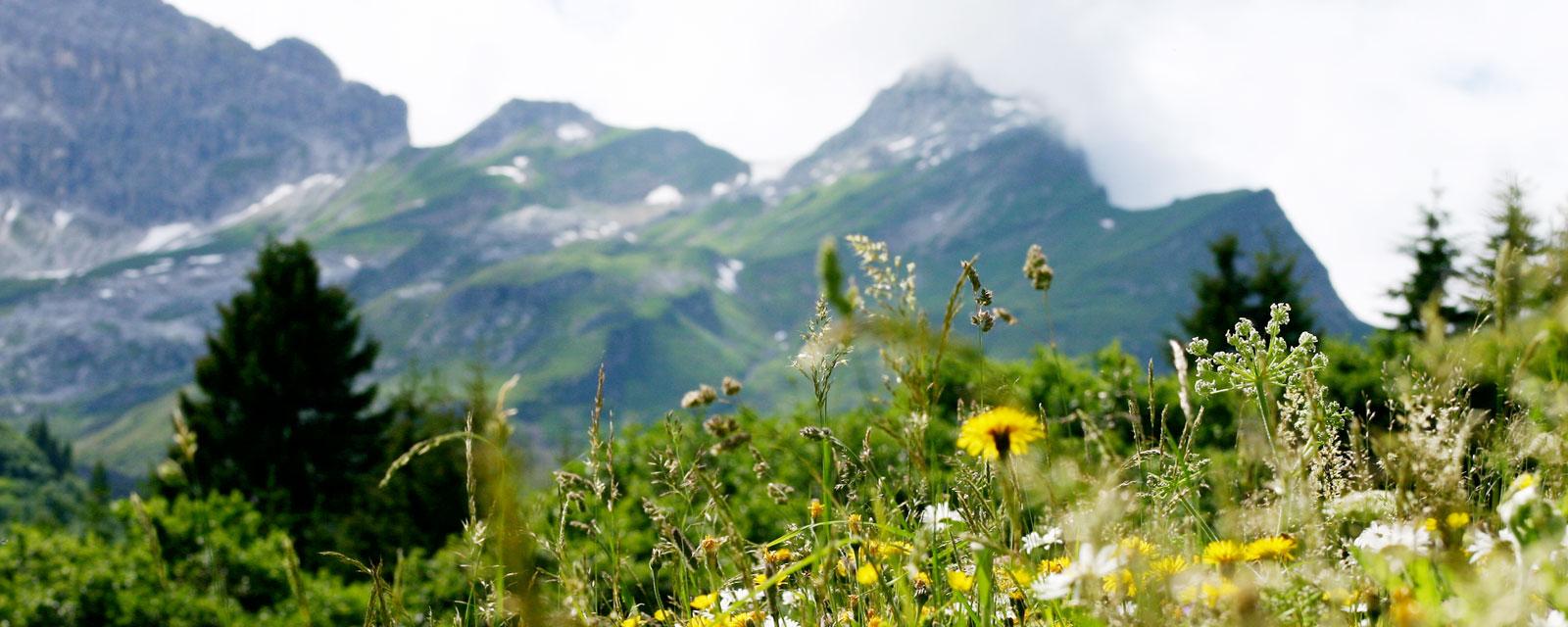 Blick auf traumhafte Bergkulisse