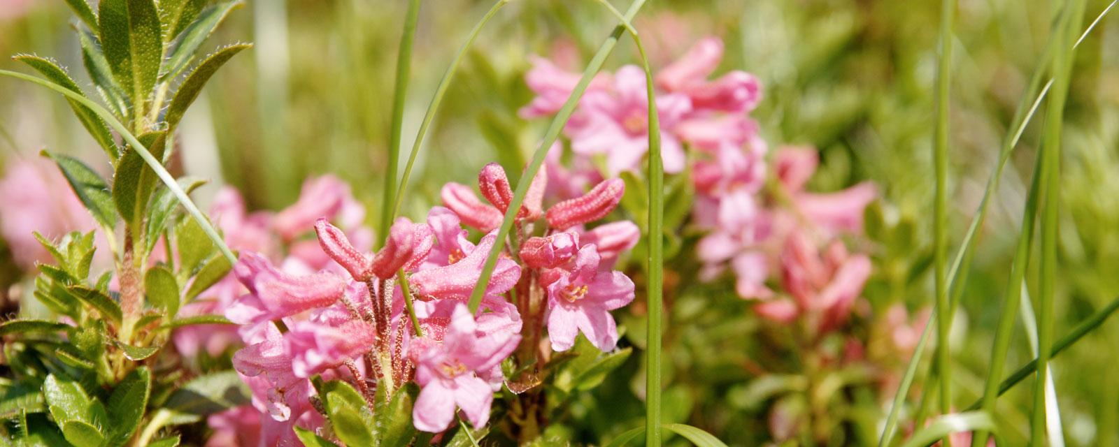 Blühende Blumenwiese